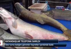 Dev turna balığını gören vatandaşlar telefona sarıldı