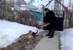 Tilki ve kediyi bir arada besliyor