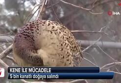 Kene ile mücadele için 5 bin kanatlı doğaya salındı