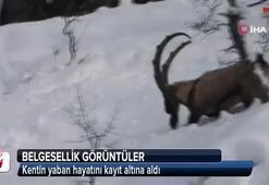 Tunceli'de belgesellik görüntüler