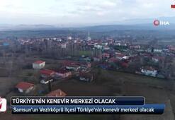 Türkiyenin kenevir merkezi olacak