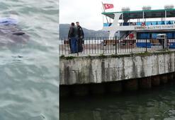 Denizde can pazarı... 15 dakika suda kaldı, kocası görünce şoke oldu