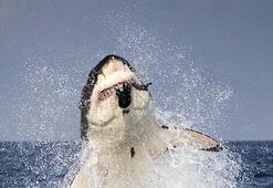 Köpekbalığı mucizesi Kanser tarih mi olacak