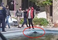 Havuzun içinde gördüler Kimse çıkaramayınca bayılttılar...