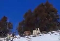 Ayı saldırısından son anda kurtulan 2 avcı, inde sürprizle karşılaştı