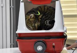Yaptıkları kedi tuvaleti için patent başvurusu yaptı
