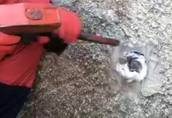 Başı duvardaki deliğe sıkışan kediyi itfaiye kurtardı
