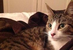 Beş yıldır kayıp olan kedi şans eseri geri döndü