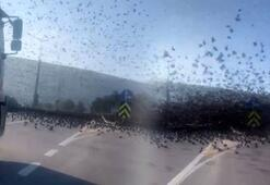 Son dakika: Çanakkalede inanılmaz olay Bir anda asfaltı kapladılar
