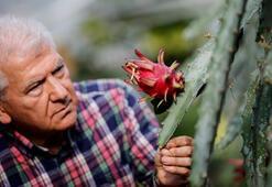 Türkiyenin ilk tropikal meyvesine tescil