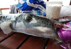 Avladığı balığı yedi hastanelik oldu