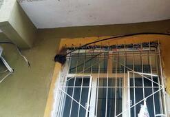 Kaçak hat çekmek isterken elektrik çarptı