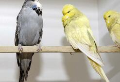 Üremeyen kuşlardan cam tüp yöntemiyle yavru alıyor