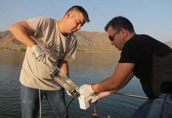 Enerji üretimi için kurulan baraj Türkiye'nin yeni kuş cenneti oldu