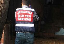 Aydın'da deve dehşeti Bakıcısını feci şekilde öldürdü