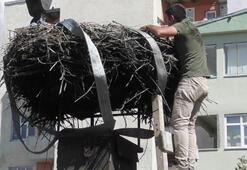54 yıllık leylek yuvası böyle taşındı