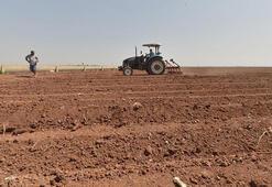 Çiftçi pazarında 5 milyar liralık hedef
