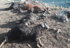 Bingölde hayvanlar bu halde bulundu