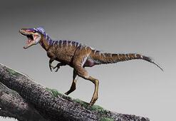 Avustralyada yeni dinozor türü keşfedildi
