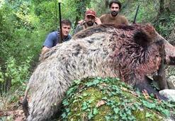 350 kiloluk domuzu vurup, fotoğraf çektirdiler