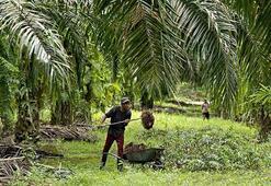 Malezya palm yağı ihracatında Türkiyede büyük potansiyel görüyor