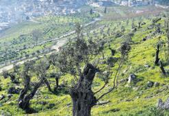 Kadifekale'de yeşil doku daha da arttı