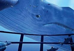 Mavi Balina timi kuruldu