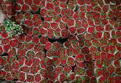 Çiçek sektörü, İngilizlerin Anneler Gününe hazırlanıyor