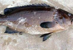 Lagos, avlanması yasak türler listesinden çıkartıldı