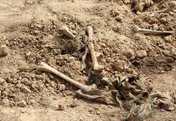 Irakta yeni bir toplu mezar bulundu