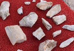 Kayseride 10 milyon yıl önce yaşamış fil fosilleri bulundu