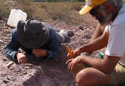 Arjantinde bilinmeyen bir dinozor türünün kemikleri bulundu