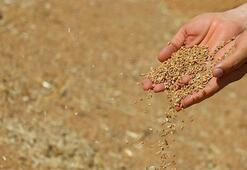 Bakanlık açıkladı: Buğday üretimi ihtiyacı karşılamaya yetiyor