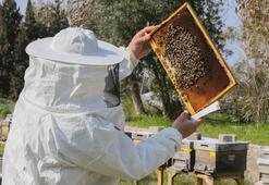 Bal arısı efe tescillendi