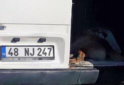 Minibüsün arkasına bağlanıp sürüklenen köpek telef oldu