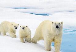 'Küresel ısınmaya adapte oldular'