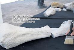 Kayseri'de 10 milyon yıllık fil fosili bulundu