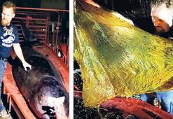 Yuttuğu 40 kilo plastik öldürdü