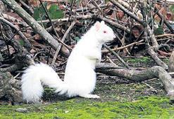 2 yıl aradan sonra albino sincaba kavuştu