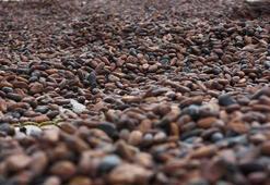 2018in yıldızı kakao, ocakta yatırımcısını üzdü