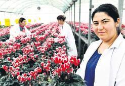 Bayındırlı çiçekçiler Hollanda ile yarışıyor