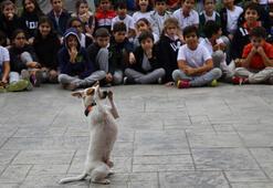 ide öğrencilerinden sokak hayvanlarına büyük destek