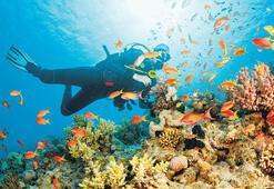 Suyun altındaki gizemli dünya