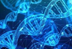 Zayıf insan DNA şanslısı