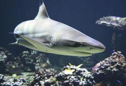 Köpekbalığı saldırılarının en çok olduğu yerler