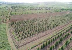 Orman Genel Müdürlüğü 66 personel alacak