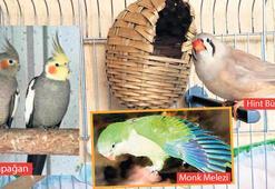 Kaçak papağan operasyonu
