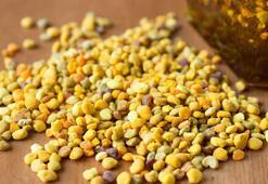 Arı Poleni nedir Arı poleninin faydaları nelerdir
