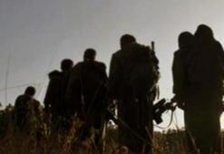 Şırnakta PKKya büyük darbe
