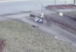 Son dakika: Bir anda etrafını sardılar Aç pitbullar kadına kâbusu yaşattı